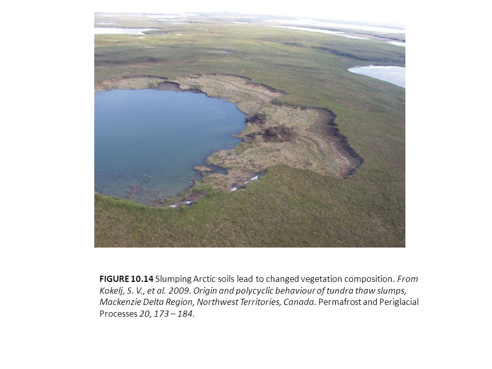 FIGURE 10.14 Slumping Arctic soils lead to changed vegetation composition. From Kokelj, S. V., et al. 2009. Origin and polycyclic behaviour of tundra