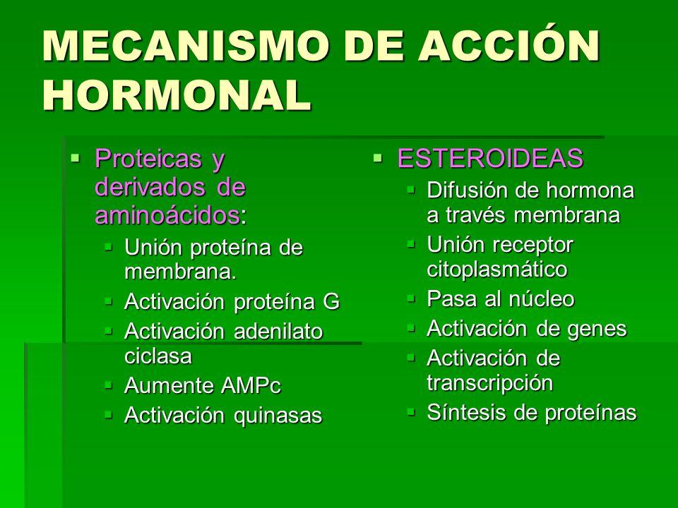 MECANISMO DE ACCIÓN HORMONAL Proteicas y derivados de aminoácidos: Proteicas y derivados de aminoácidos: Unión proteína de membrana. Unión proteína de