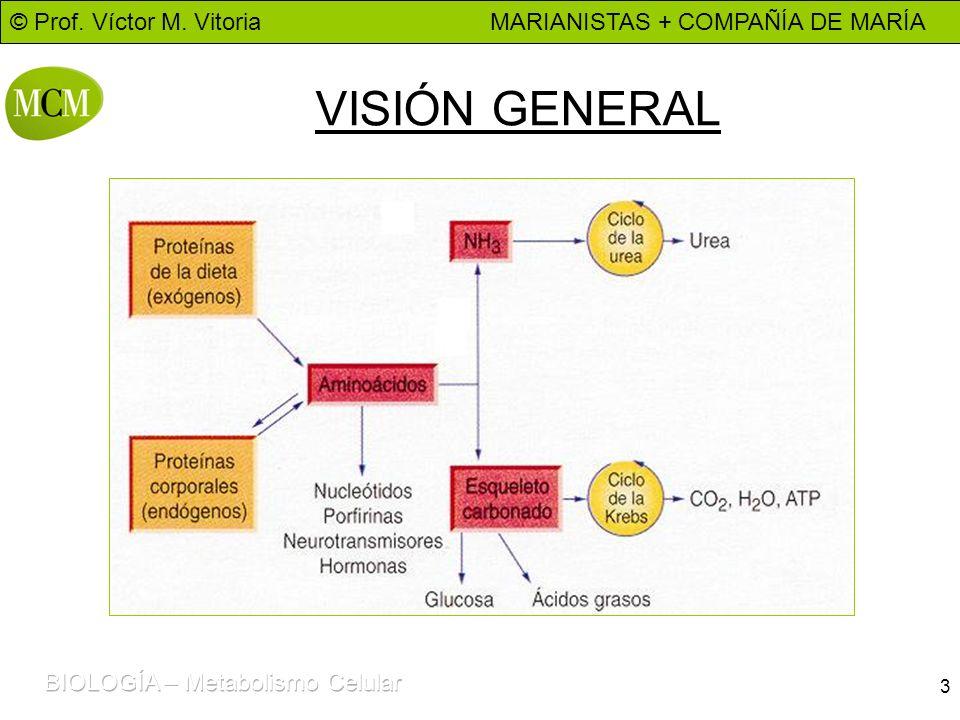 © Prof. Víctor M. Vitoria MARIANISTAS + COMPAÑÍA DE MARÍA 3 VISIÓN GENERAL