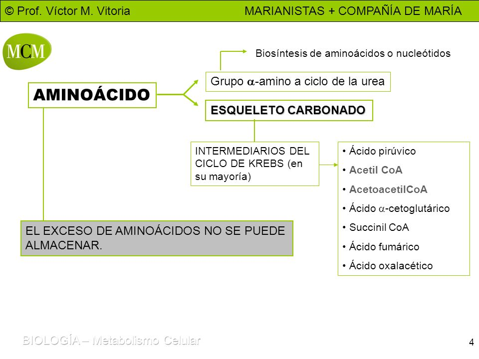 © Prof. Víctor M. Vitoria MARIANISTAS + COMPAÑÍA DE MARÍA 4 AMINOÁCIDO Grupo -amino a ciclo de la urea Biosíntesis de aminoácidos o nucleótidos ESQUEL