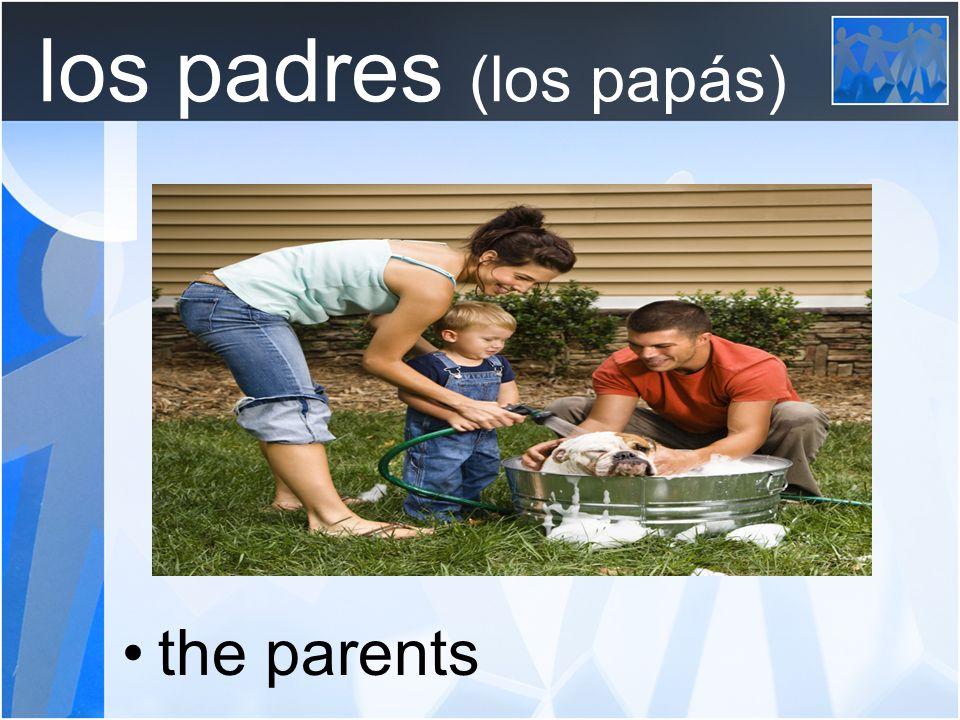 los padres (los papás) the parents