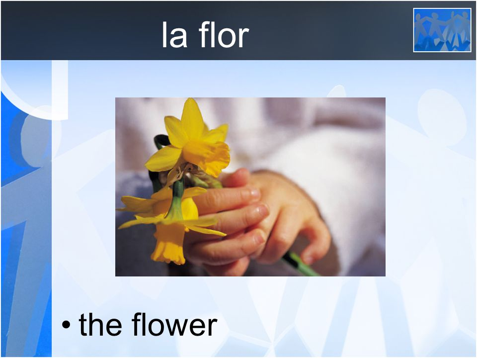 la flor the flower
