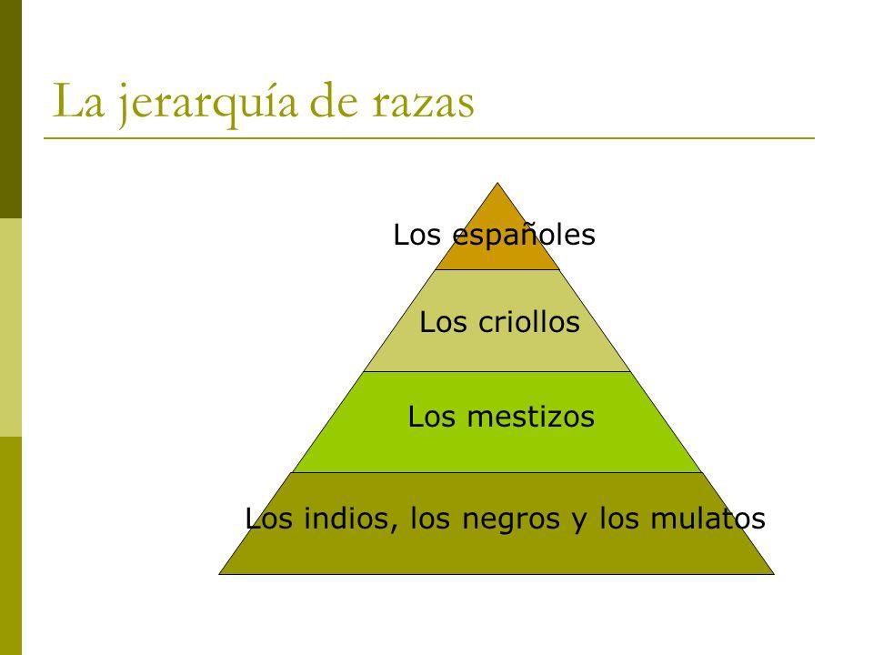 La jerarquía de razas Los mestizos Los criollos Los españoles Los indios, los negros y los mulatos