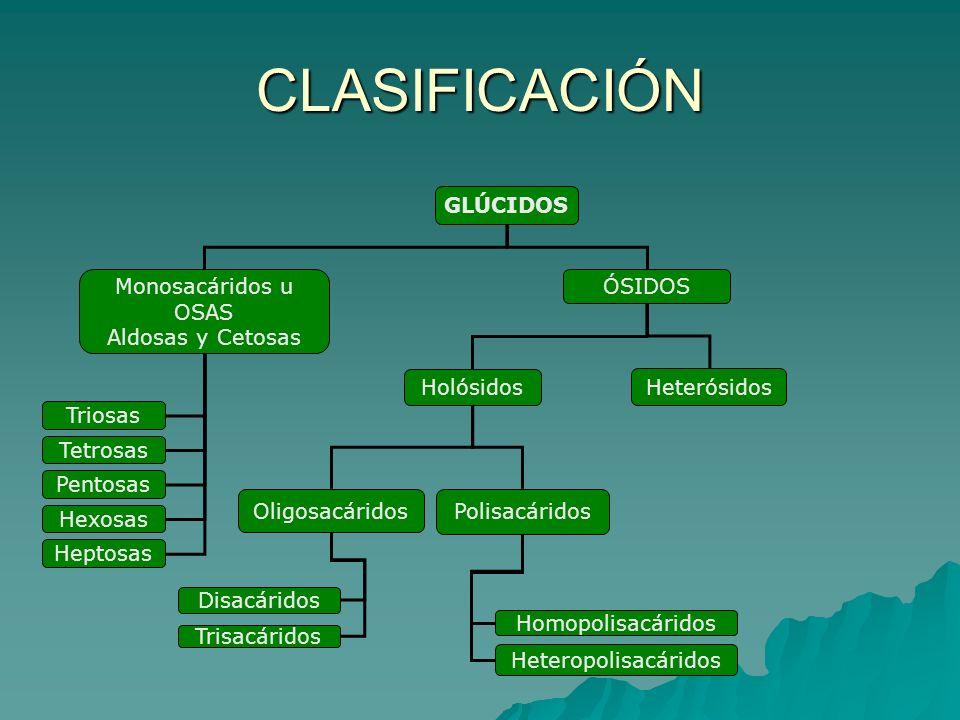 CLASIFICACIÓN GLÚCIDOS Monosacáridos u OSAS Aldosas y Cetosas ÓSIDOS Triosas Tetrosas Pentosas Hexosas Heptosas Holósidos Heterósidos Oligosacáridos P