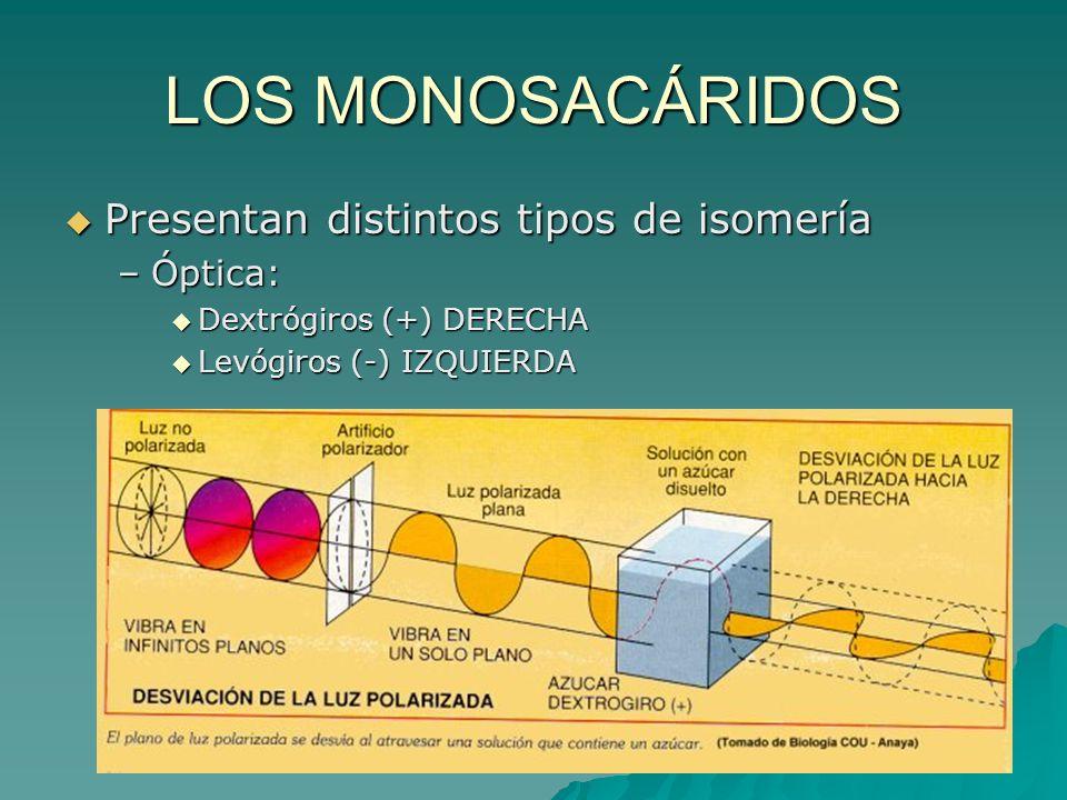 LOS MONOSACÁRIDOS Presentan distintos tipos de isomería –Ó–Ó–Ó–Óptica: Dextrógiros (+) DERECHA Levógiros (-) IZQUIERDA