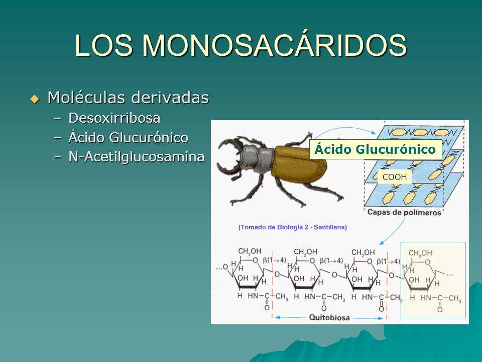 LOS MONOSACÁRIDOS Moléculas derivadas –D–D–D–Desoxirribosa –Á–Á–Á–Ácido Glucurónico –N–N–N–N-Acetilglucosamina Ácido Glucurónico COOH