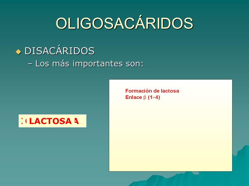 OLIGOSACÁRIDOS DISACÁRIDOS –L–L–L–Los más importantes son: MALTOSAISOMALTOSASACAROSACELOBIOSALACTOSA
