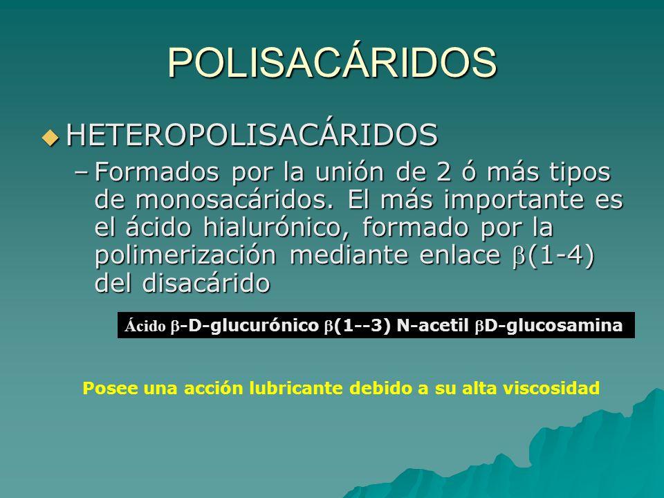 POLISACÁRIDOS HETEROPOLISACÁRIDOS –F–F–F–Formados por la unión de 2 ó más tipos de monosacáridos. El más importante es el ácido hialurónico, formado p