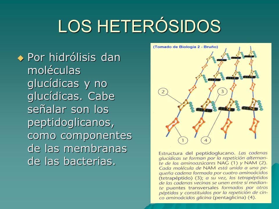 LOS HETERÓSIDOS Por hidrólisis dan moléculas glucídicas y no glucídicas. Cabe señalar son los peptidoglicanos, como componentes de las membranas de la