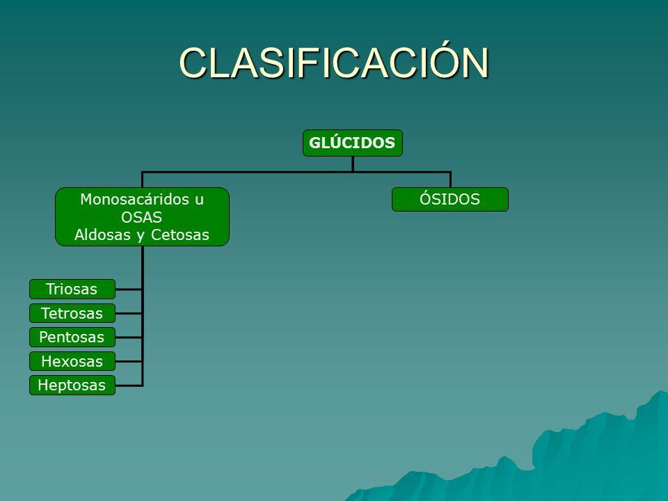 CLASIFICACIÓN GLÚCIDOS Monosacáridos u OSAS Aldosas y Cetosas ÓSIDOS Triosas Tetrosas Pentosas Hexosas Heptosas