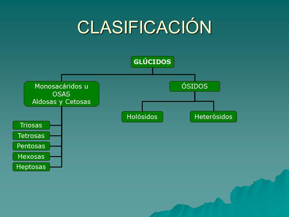 CLASIFICACIÓN GLÚCIDOS Monosacáridos u OSAS Aldosas y Cetosas ÓSIDOS Triosas Tetrosas Pentosas Hexosas Heptosas Holósidos Heterósidos