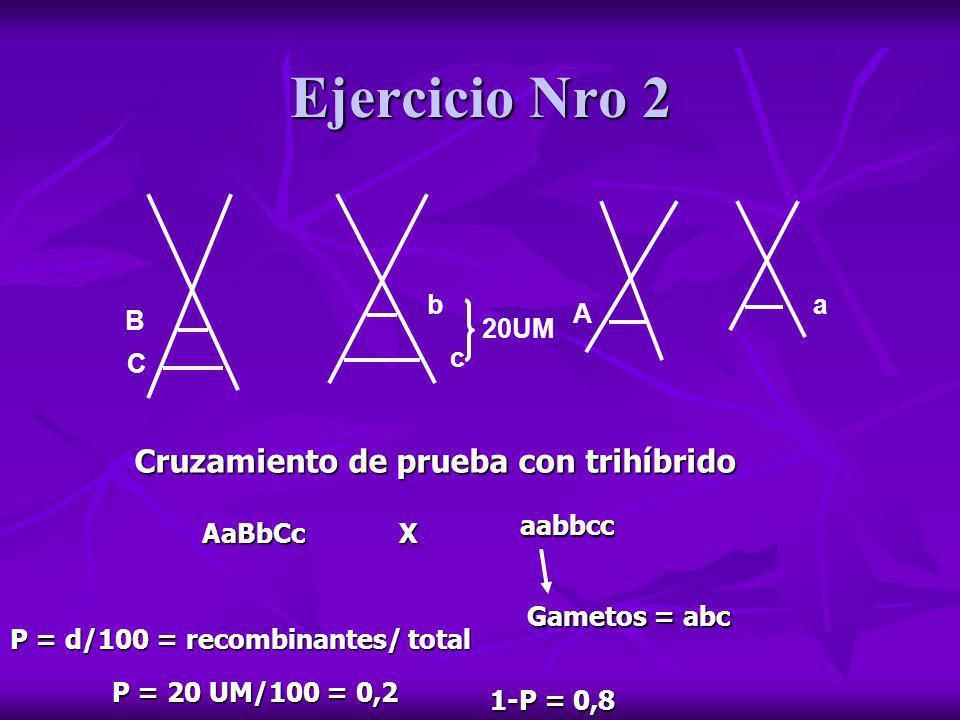 Ejercicio Nro 2 B C b c 20UM A a Cruzamiento de prueba con trihíbrido AaBbCcX aabbcc Gametos = abc P = d/100 = recombinantes/ total P = 20 UM/100 = 0,