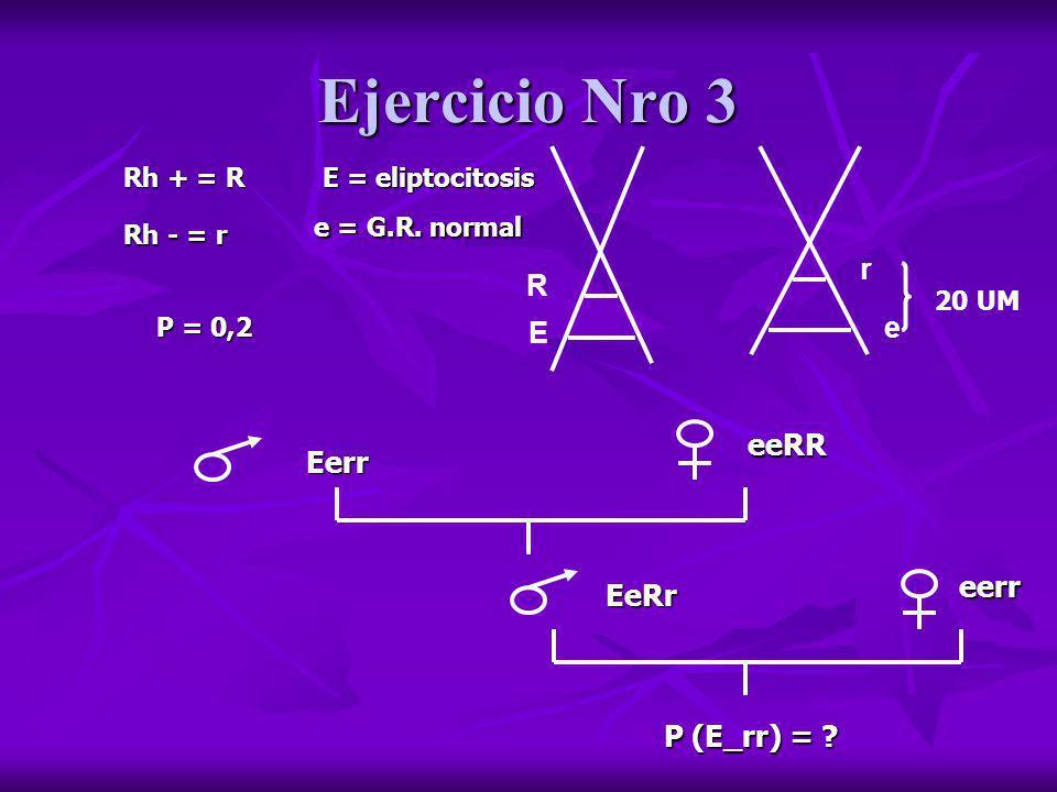 Ejercicio Nro 3 Rh + = R Rh - = r E = eliptocitosis e = G.R. normal R E r e 20 UM P = 0,2 Eerr eeRR EeRr eerr P (E_rr) = ?