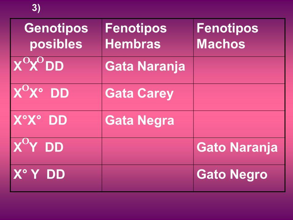 Genotipos posibles Fenotipos Hembras Fenotipos Machos X X DDGata Naranja X X° DDGata Carey X°X° DDGata Negra X Y DDGato Naranja X° Y DDGato Negro O O O O 3)