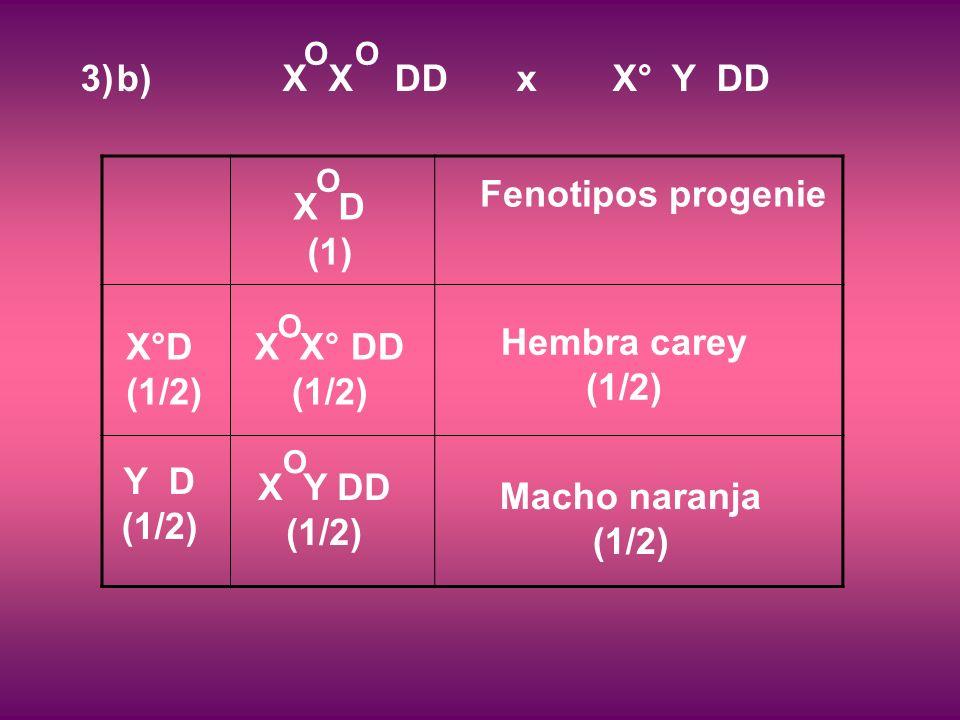 Fenotipos progenie Hembra carey (1/2) Macho naranja (1/2) X°D (1/2) Y D (1/2) 3)b) X X DD x X° Y DD O X D (1) O X Y DD (1/2) O X X° DD (1/2) O