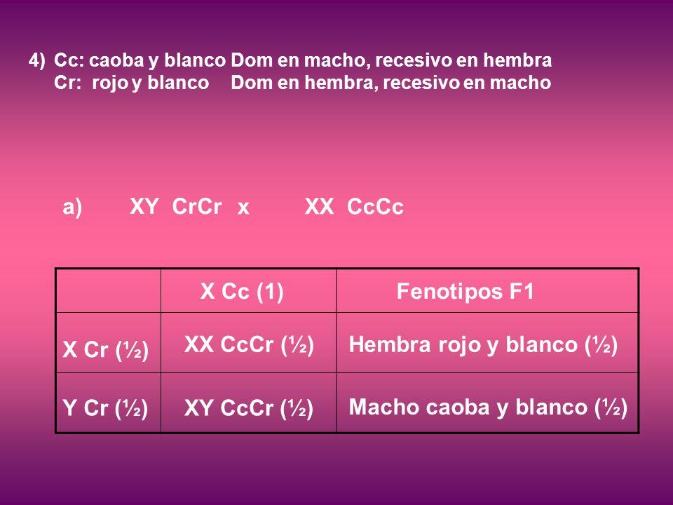 4)Cc: caoba y blanco Dom en macho, recesivo en hembra Cr: rojo y blancoDom en hembra, recesivo en macho a) XY CrCr xXX CcCc Fenotipos F1 X Cr (½) Y Cr (½) X Cc (1) XX CcCr (½) XY CcCr (½) Hembra rojo y blanco (½) Macho caoba y blanco (½)