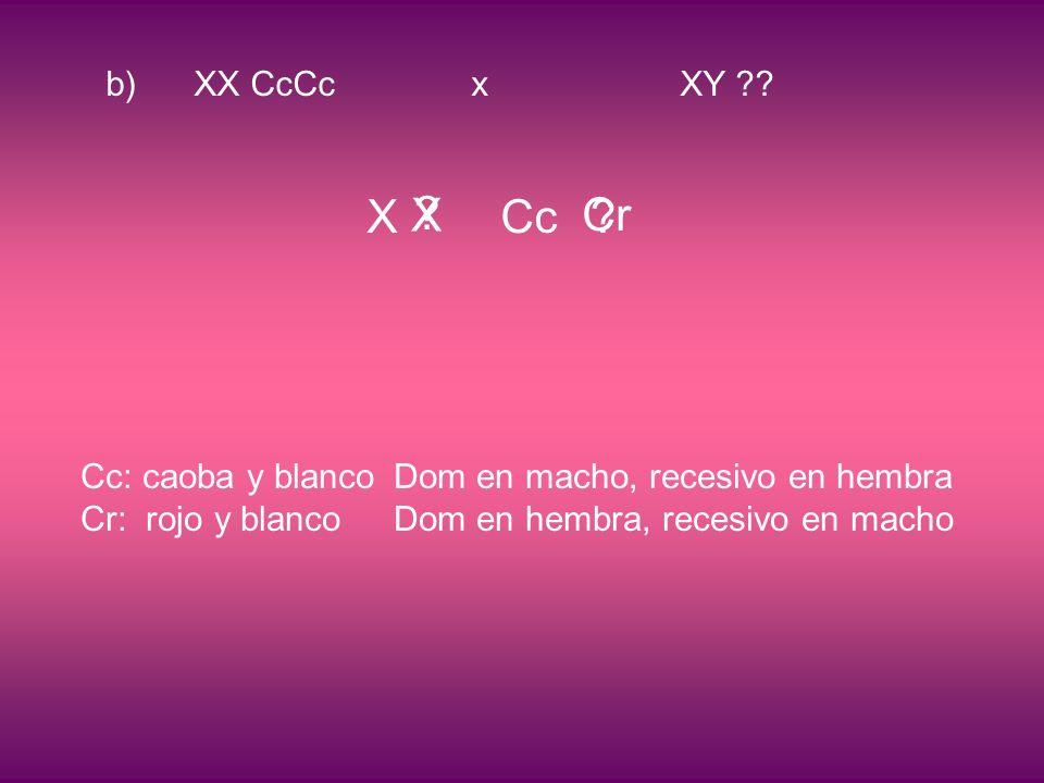 b) XX CcCcxXY ?. X Cc .