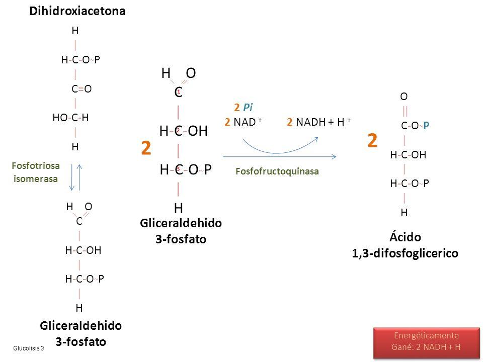 H | H-C-O ~ P | C=O | HO-C-H | H H O C | H-C-OH | H-C-O ~ P | H Fosfotriosa isomerasa Dihidroxiacetona Gliceraldehido 3-fosfato H O C | H-C-OH | H-C-O