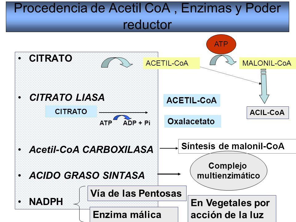 Procedencia de Acetil CoA, Enzimas y Poder reductor CITRATO CITRATO LIASA Acetil-CoA CARBOXILASA ACIDO GRASO SINTASA NADPH Vía de las Pentosas Enzima