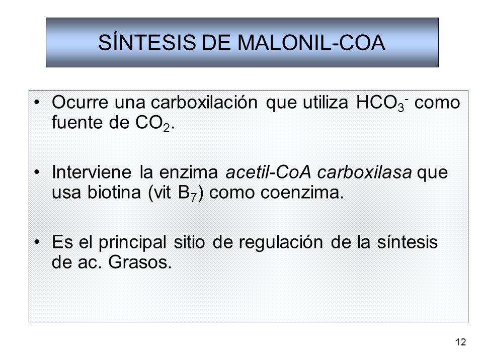 12 SÍNTESIS DE MALONIL-COA Ocurre una carboxilación que utiliza HCO 3 - como fuente de CO 2. Interviene la enzima acetil-CoA carboxilasa que usa bioti