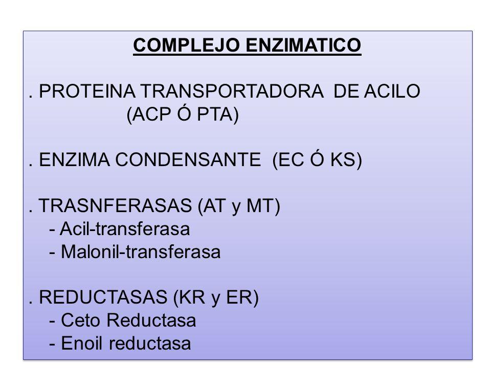 COMPLEJO ENZIMATICO. PROTEINA TRANSPORTADORA DE ACILO (ACP Ó PTA). ENZIMA CONDENSANTE (EC Ó KS). TRASNFERASAS (AT y MT) - Acil-transferasa - Malonil-t