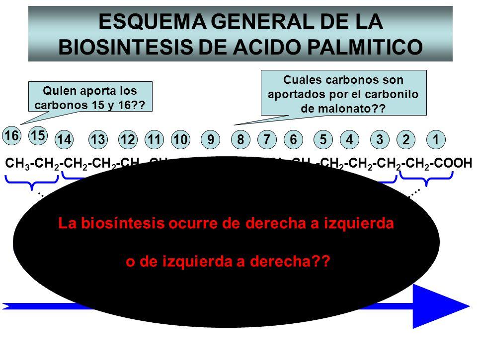 CH 3 -CH 2 -CH 2 -CH 2 -CH 2 -CH 2 -CH 2 -CH 2 -CH 2 -CH 2 -CH 2 -CH 2 -CH 2 -CH 2 -CH 2 -COOH 11314 1516 91011125678234 1 ACETIL-CoA y 7 MALONIL-CoA