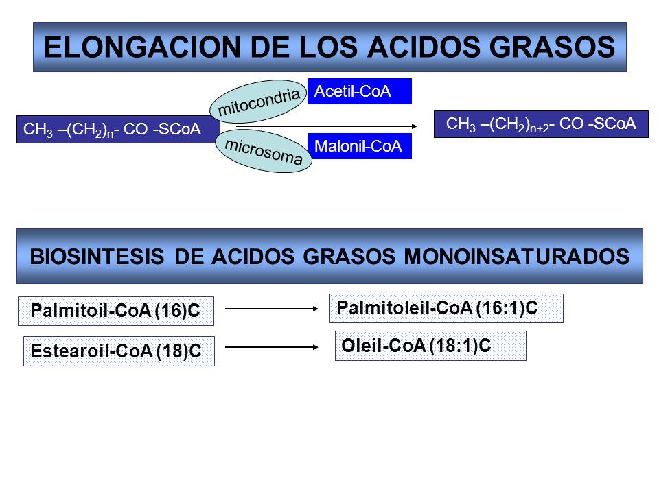 ELONGACION DE LOS ACIDOS GRASOS CH 3 –(CH 2 ) n - CO -SCoA CH 3 –(CH 2 ) n+2 - CO -SCoA Acetil-CoA Malonil-CoA mitocondria microsoma BIOSINTESIS DE AC