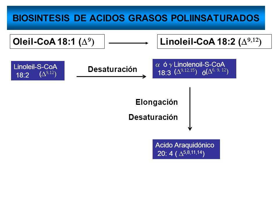 BIOSINTESIS DE ACIDOS GRASOS POLIINSATURADOS Oleil-CoA 18:1 ( Linoleil-CoA 18:2 ( Linoleil-S-CoA 18:2 ( ó Linolenoil-S-CoA 18:3 ó ( ( Acido Araquidóni