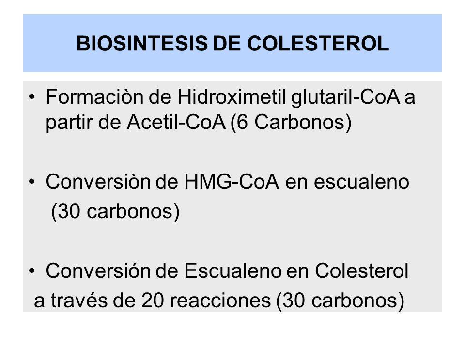 BIOSINTESIS DE COLESTEROL Formaciòn de Hidroximetil glutaril-CoA a partir de Acetil-CoA (6 Carbonos) Conversiòn de HMG-CoA en escualeno (30 carbonos)