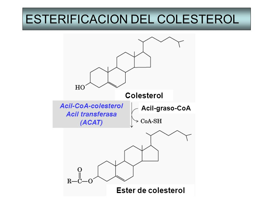 ESTERIFICACION DEL COLESTEROL Colesterol Acil-CoA-colesterol Acil transferasa (ACAT) Acil-graso-CoA Ester de colesterol