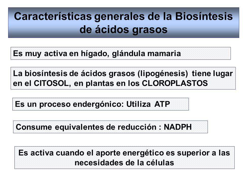 Características generales de la Biosíntesis de ácidos grasos La biosíntesis de ácidos grasos (lipogénesis) tiene lugar en el CITOSOL, en plantas en lo