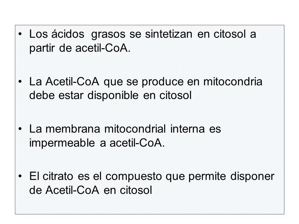Procedencia de Acetil CoA, Enzimas y Poder reductor CITRATO CITRATO LIASA Acetil-CoA CARBOXILASA ACIDO GRASO SINTASA NADPH Vía de las Pentosas Enzima málica Complejo multienzimático ACETIL-CoAMALONIL-CoA ATP ACIL-CoA CITRATO ACETIL-CoA Oxalacetato ATP ADP + Pi Síntesis de malonil-CoA En Vegetales por acción de la luz