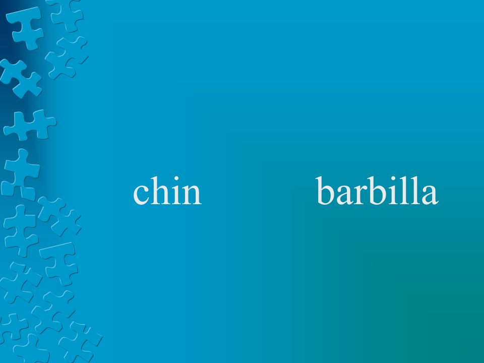 chinbarbilla