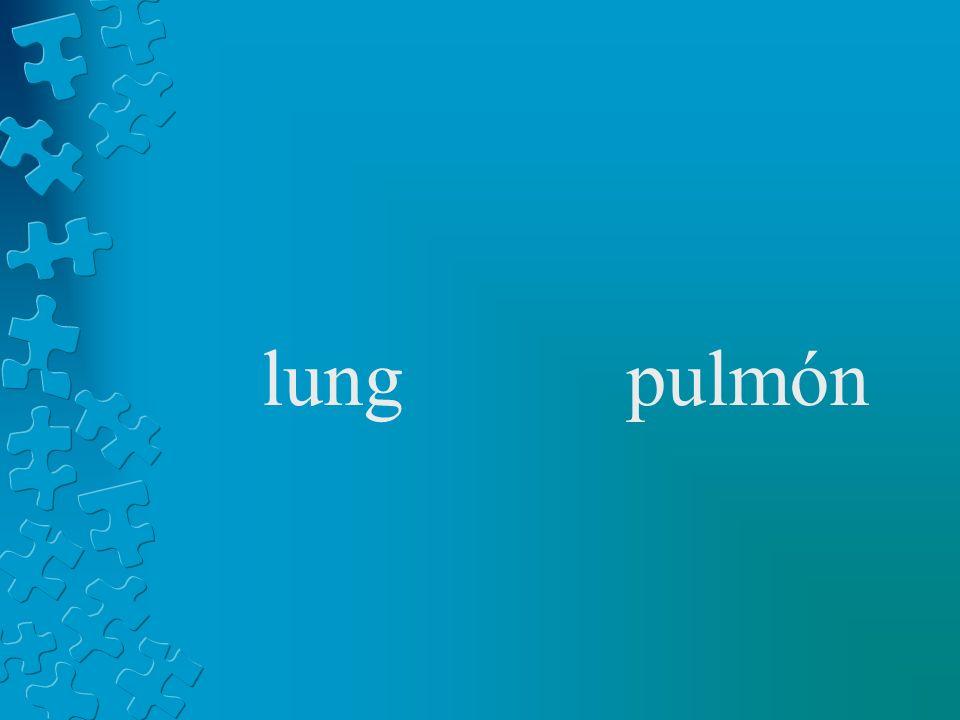 lungpulmón