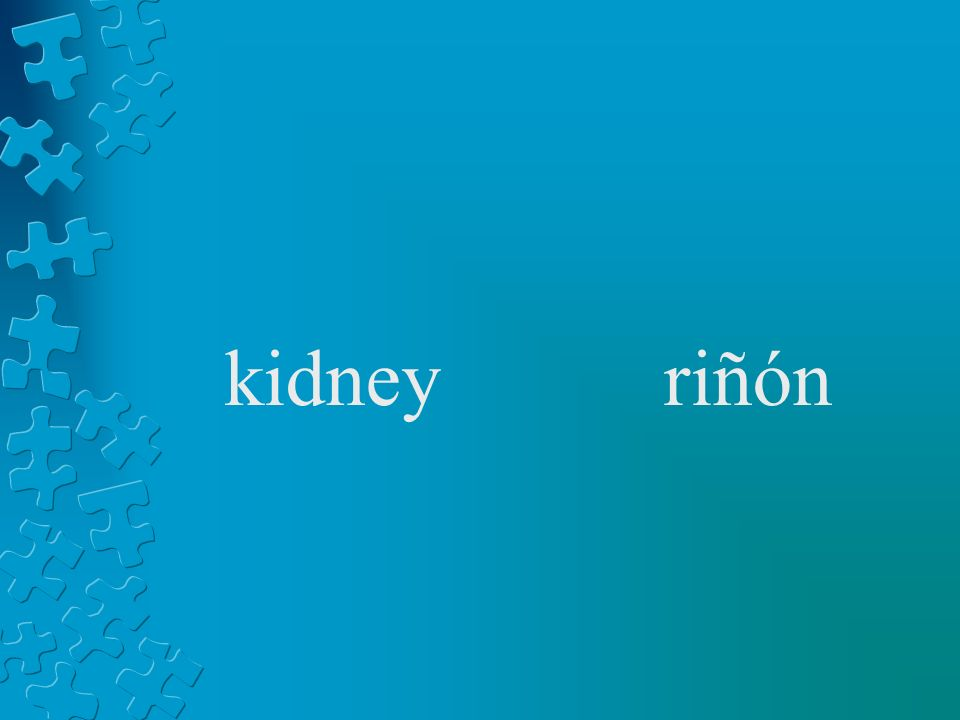 kidneyriñón