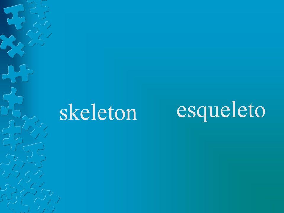 skeleton esqueleto