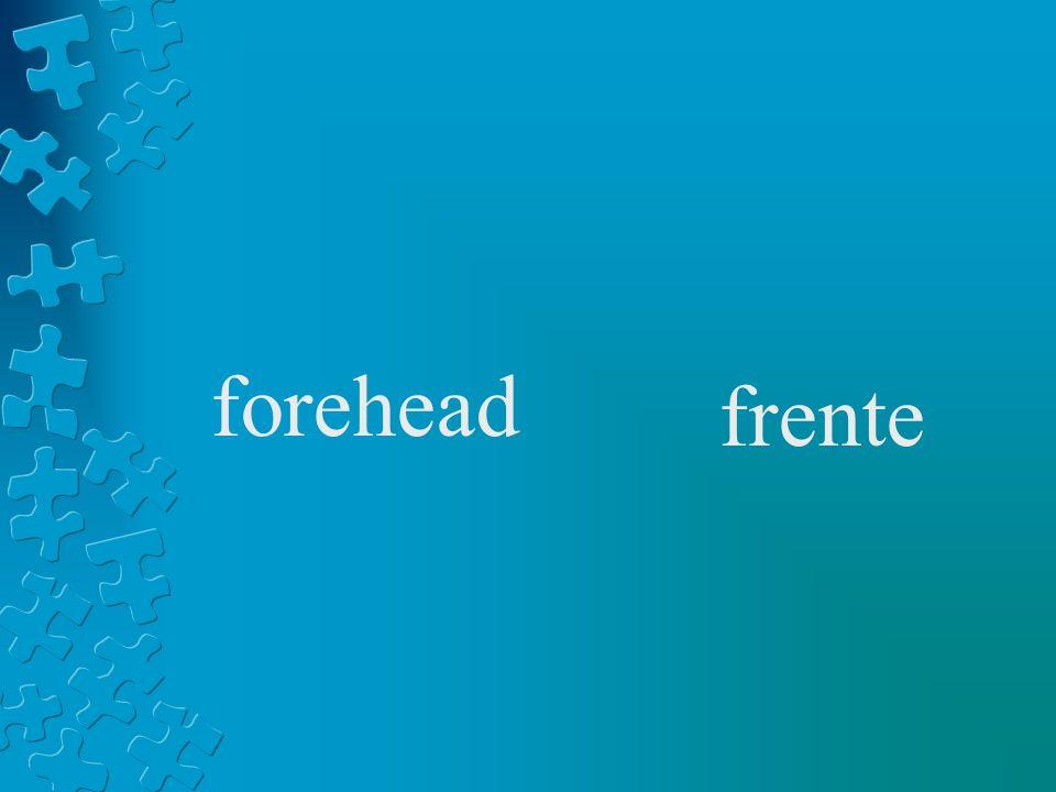 forehead frente
