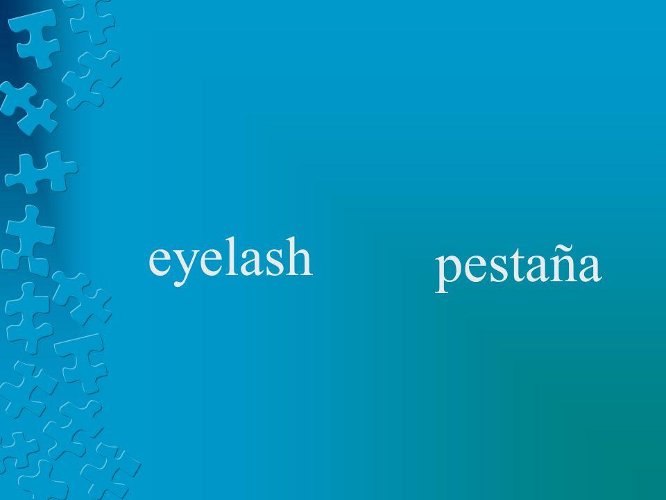 eyelash pestaña