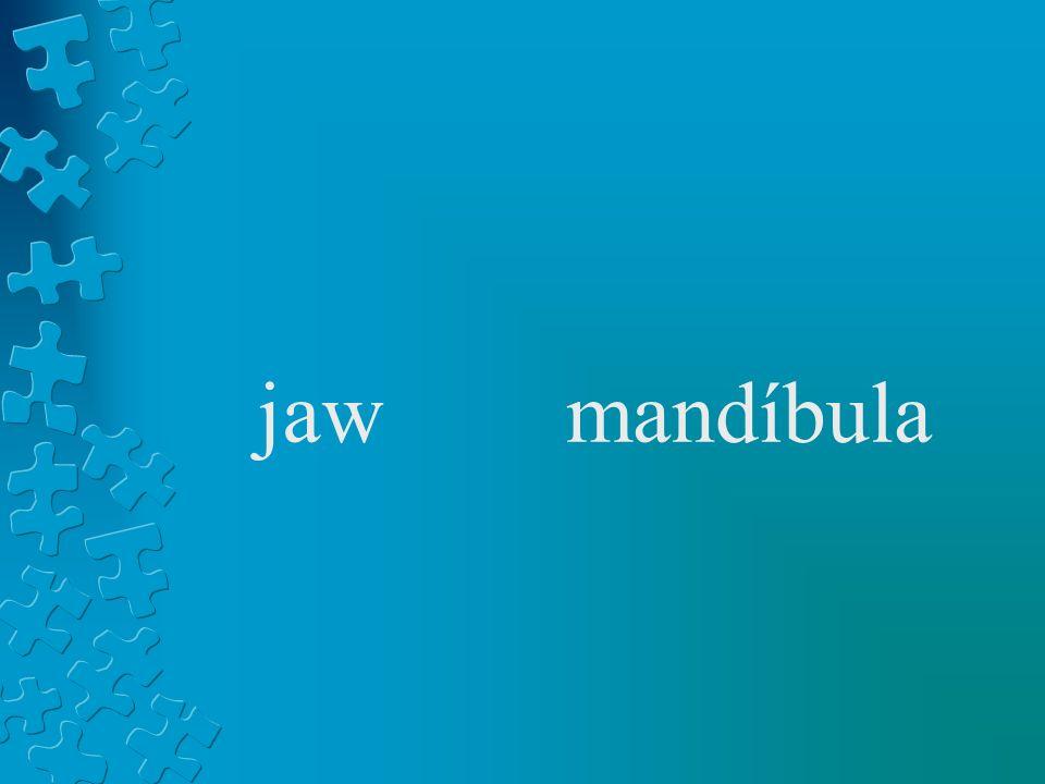 jawmandíbula