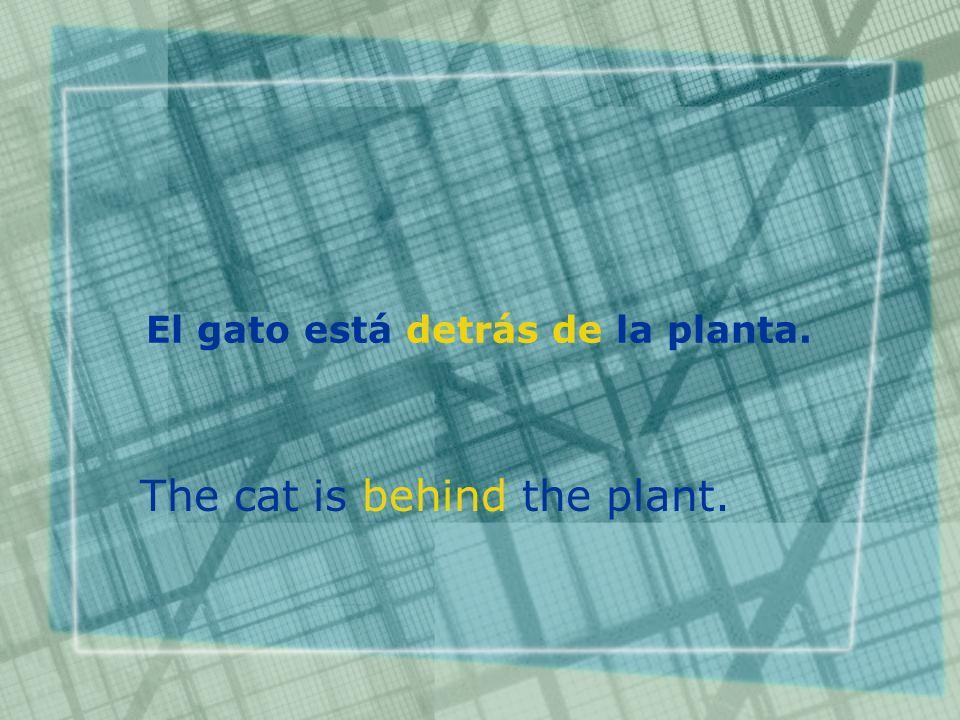 El gato está detrás de la planta. The cat is behind the plant.
