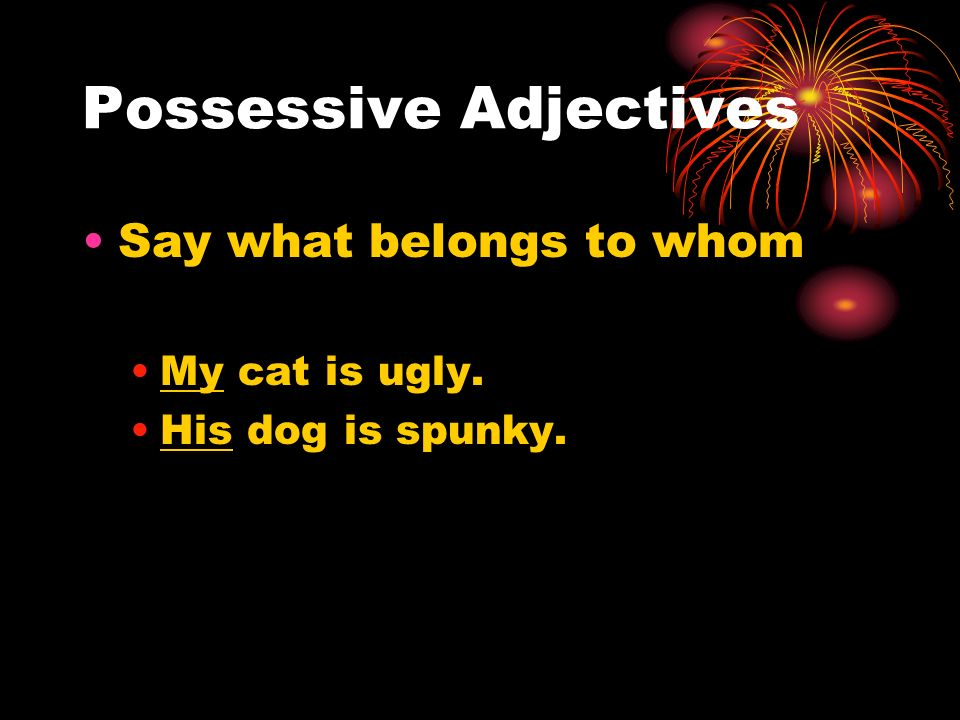 Possessive Adjectives Say what belongs to whom My cat is ugly. His dog is spunky.