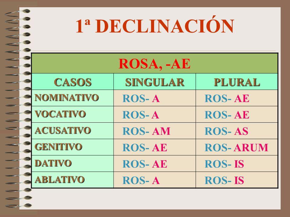 1ª DECLINACIÓN ROSA, -AE CASOSSINGULARPLURAL NOMINATIVO ROS- A ROS- AE VOCATIVO ROS- A ROS- AE ACUSATIVO ROS- AM ROS- AS GENITIVO ROS- AE ROS- ARUM DATIVO ROS- AE ROS- IS ABLATIVO ROS- A ROS- IS