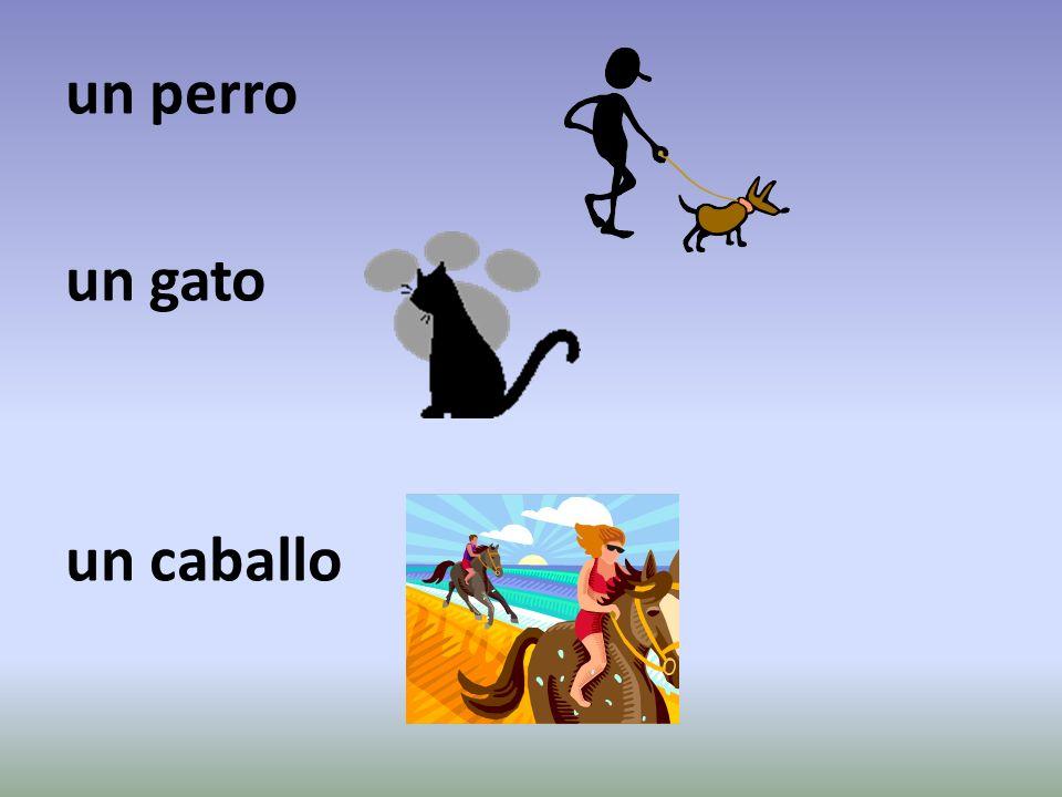 un perro un gato un caballo