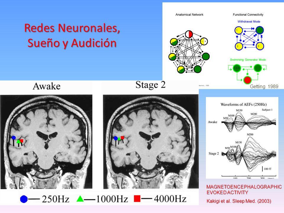 Magnetoencephalography Cortical Auditory Evoked Activity Kakigi et al. 2003