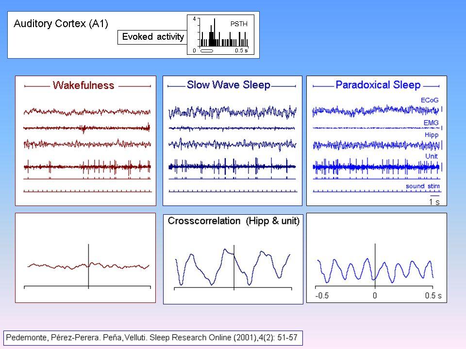 McGinty 2005 Peña et al. 1999; Velluti, 2005 Pre-Optic Region Unit Cortical auditory units