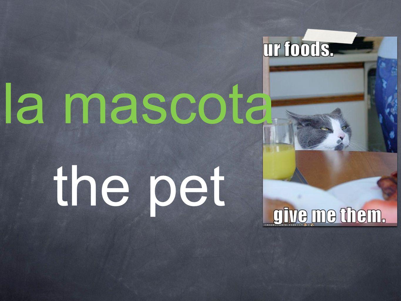 la mascota the pet