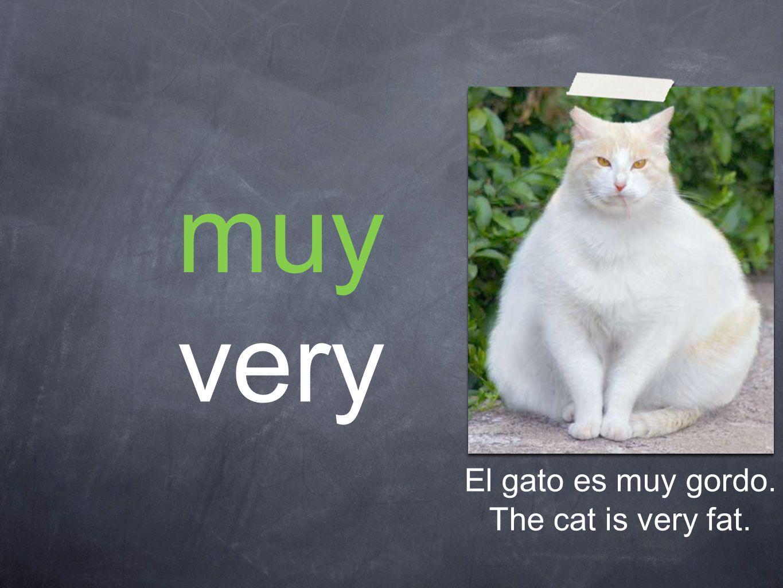 muy very El gato es muy gordo. The cat is very fat.