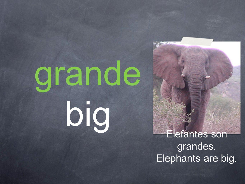 grande big Elefantes son grandes. Elephants are big.