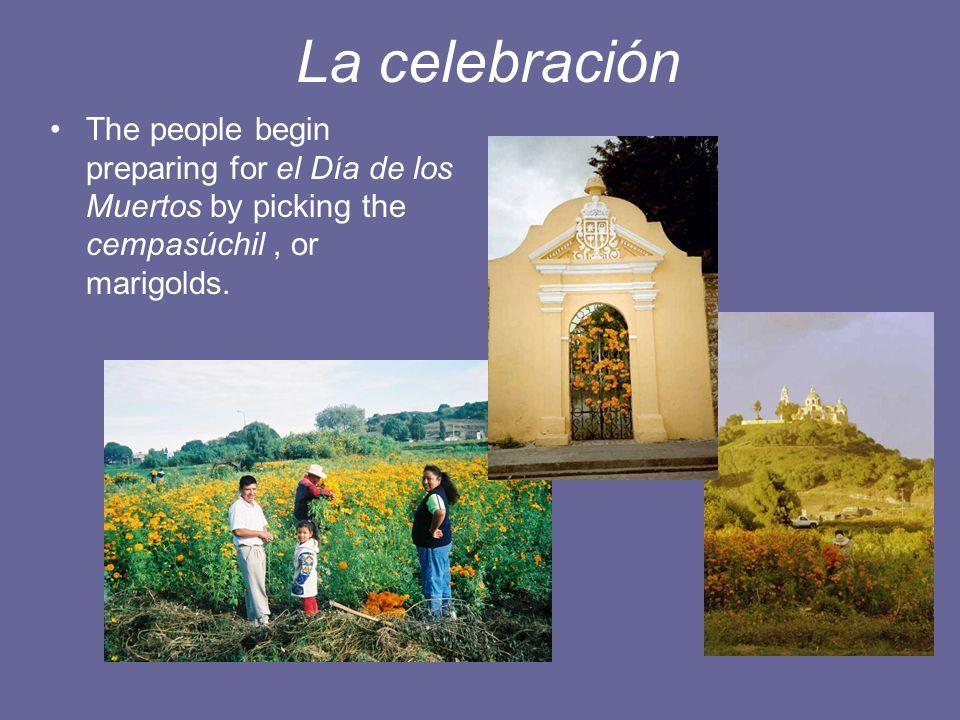 La celebración The people begin preparing for el Día de los Muertos by picking the cempasúchil, or marigolds.
