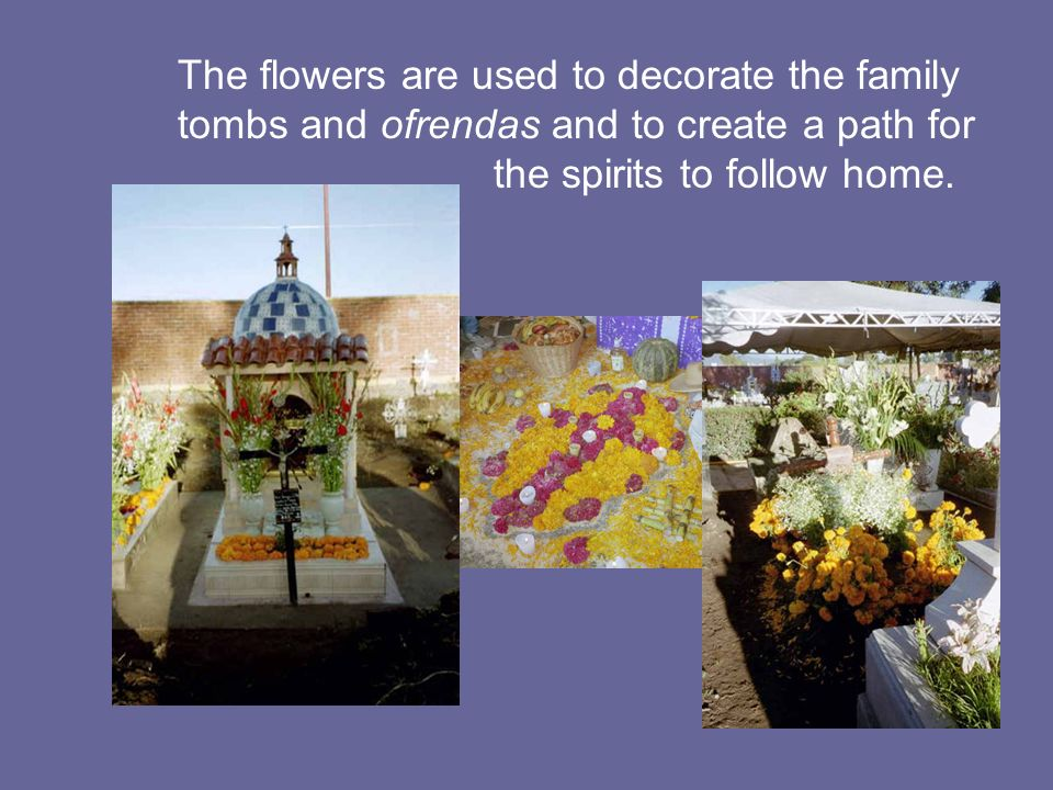 The flowers are used to decorate the family tombs and ofrendas and to create a path for the spirits to follow home.